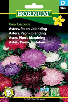 Asters Bland. - Pink Cascade