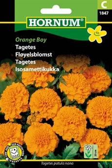Tagetes - Orange Boy