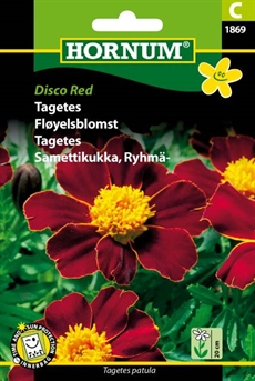 Tagetes - Disco Red