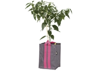 Plantepose Blueberry 21L